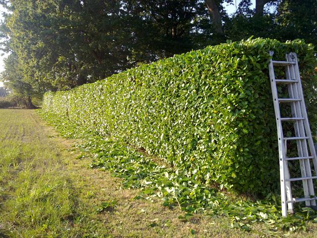 entretien jardin orthez
